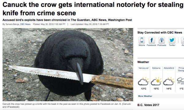 Canuck-The-Crow